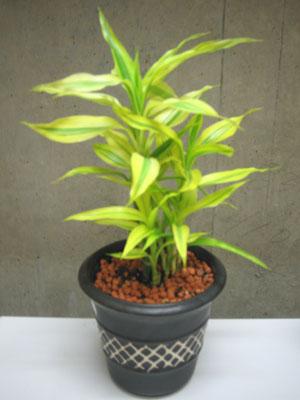給湯室の観葉植物