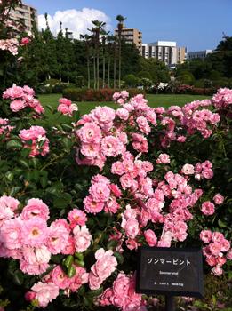 takekuma120605_04.jpg