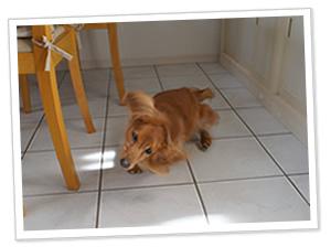 dog2.jpg